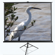 "Elite Screens Tripod Series T120UWV1 Diagonal 120 "", 4:3, Viewable screen width (W) 244 cm, Black  128,00"